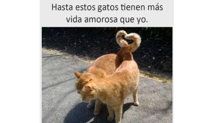 Viral Facebook Memes De Gatos Por Día Del Gato 2019